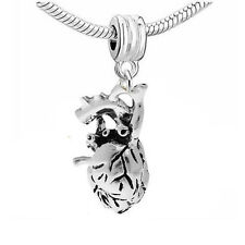Anatomical 3d Human Heart Dangle Charm European Bead Compatible for Most Europea