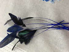 Coq Stripped feathers 10 pcs   For fascinators, hats & craft use