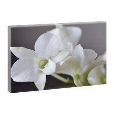 Deko-Bilder aus Leinwand mit Orchideen-Dünger