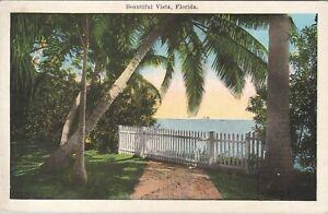 WB postcard, beautiful palm tree water vista in Florida