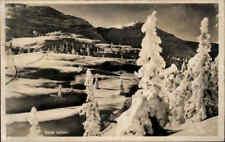 NORWEGEN Norge Norway ~1930/40 Vereiste Landschaft Botanik Pflanzen Baum Tree
