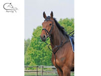 Busse Leather Running Martingale Pony  Full Black FREE DELIVERY
