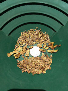 BOGO SPECIAL - 5 lb Gold Nugget Paydirt Unsearched and Guaranteed Added Gold!