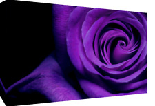 "LARGE PURPLE ROSE FLOWER FLORAL CANVAS PICTURE WALL ART PRINT A1 34"" X 20"""