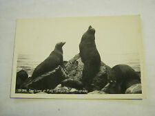 Sea Lions At Play, Oregon Coast Highway Post Card unknown era (GS19-49)