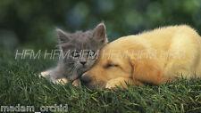 ANTI FLEA & TICK TREATMENT for DOGS CATS PETS - NON TOXIC - ECO FRIENDLY