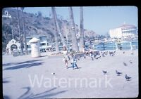 1964 kodachrome Photo slide Catalina Island Avalon California