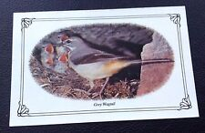 POSTCARD: (WB9): GREY WAGTAIL: COLOUR: UN POSTED