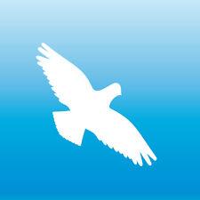 Warnvogel Aufkleber 8cm weiß Habicht Vogel Schreck Fenster Schutz Deko Folie