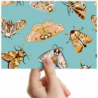 "Butterflies Moths Insects Small Photograph 6"" x 4"" Art Print Photo Gift #3154"