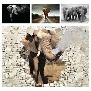 Vlies Fototapete 3D Effekt Elefant Afrika Tiere Wandtapete Natur Wohnzimmer XXL