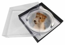 Fox Terrier Dog Glass Paperweight in Gift Box Christmas Present, AD-WHT1PW
