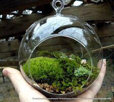 sphagnum moss seeds 25 seeds per pack