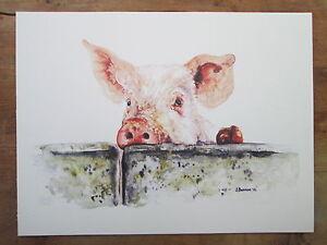 Pig,  watercolour, print of original painting 16 x 12 on watercolour paper