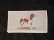 Cigarette Trade Cards Top Dogs Collection No 13 The English Springer Spaniel