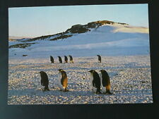 polar expedition in Terre Adelie penguin x2 commemorative card FSAT TAAF 1979