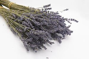 Dried Lavender Bunch - Box of 25