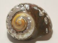 Large Natural Spiral Mother Of Pearl Seashell Sea Shell Beach Nautical Decor