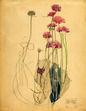 Sea Pink, Holy Island  :  Charles Rennie Mackintosh  : Home Decor Art Print