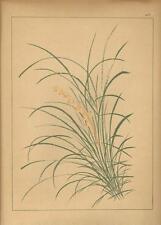 Stampa antica GIAPPONE JAPAN STYLE cespuglio fiorito Gillot 1885 Antique print