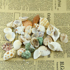 Beach Mixed SeaShells Mix Sea Shells Shell Craft SeaShells Aquarium Approx 100g