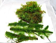 Live moss mix #5 Terrarium moss, vivarium moss, orchids or terrarium