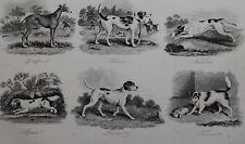 1831 ANTIQUE FARRIER HORSE PRINT ~ DOGS ~ TERRIER FOXHOUND GREYHOUND HARRIER