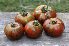 Tomatensamen CHOCOLATE STRIPES 10+ samen