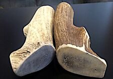 1 XX-Large Elk Whole Antler Dog Chew..Free Shipping...Durable And Massive!!!