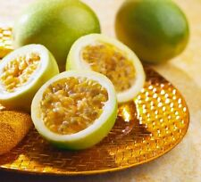 Yellow Maracuja Giant Passion Fruit Passiflora Edulis Passionflower Seeds 25 PCS