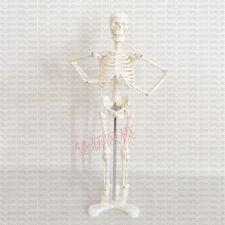 1Pcs (18 inch) Molded Human Skeleton Model Lifelike Bone Color #A475 LW