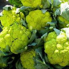 10 pcs Imported Green Cauliflower (Brassica oleracea) F1 hybrid vegetable seeds