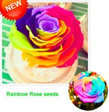 100 Pcs Seeds Rainbow Rose Bonsai Rare Potted Flowers Plants Garden Perennials D