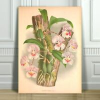 JEAN LINDEN - Beautiful Pink & White Orchid #45 - CANVAS PRINT POSTER - 32x24""