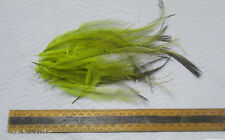EMU FEATHERS DYED,OLIVE GREEN, tail small/medium