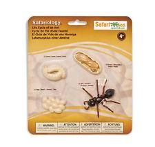 Life Cycles of a ANT # 663916 ~ FREE SHIP in USA w/ $25+SAFARI,Ltd.