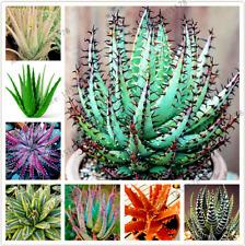 100 PCS Seeds Aloe Vera Plants Beauty Ornamental Cosmetic Bonsai Home Garden NEW