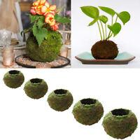 Creative Moss Ball Flower Pot Plant Pot Indoor Outdoor Garden Decoration New