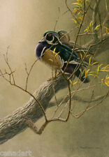 Robert BATEMAN Wood Duck Pair in Willow LTD art print Mint in Folder COA A.P.