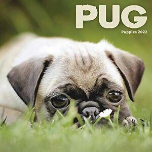 Pug Puppies Mini Calendar 2022 NEW