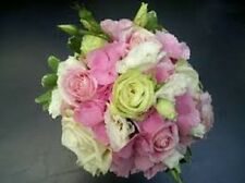 20+ LIME GREEN, PINK, &  WHITE  LISIANTHUS FLOWER SEEDS MIX / ANNUAL