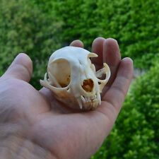 Animal Skull Mini Plutus Cat Model Creative Ornament Statue Resin Figurine Gift