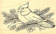 SNOW BIRD IN TREE Wood Mounted Rubber Stamp IMPRESSION OBSESSION F16258 NEW