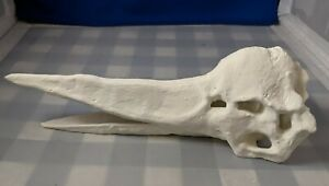 9 Inch Pteranodon Skull Dinosaur Fossil Bone Replica 3D Printed Handpainted