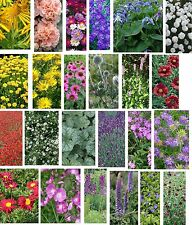 Pick & Mix Perennial Flower Plug Plants Plugs Post £2.90 any Quantity