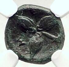 METAPONTION Metapontum in LUCANIA Ancient 300BC Greek Coin ATHENA NGC i72877