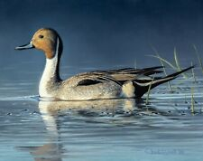 Original Oil Painting - FRAMED Waterfowl Painting, Pintail Duck by Chuck Black