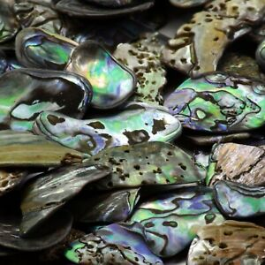 Natural Paua Shell Pieces Jewellery Bead Making Crafts  15-30mm Fines 50 grams
