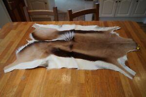 Springbok Hide / Pelt