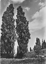 BG2306 botanischer garten berlin dahlem pappaln am CPSM 14x9.5cm germany